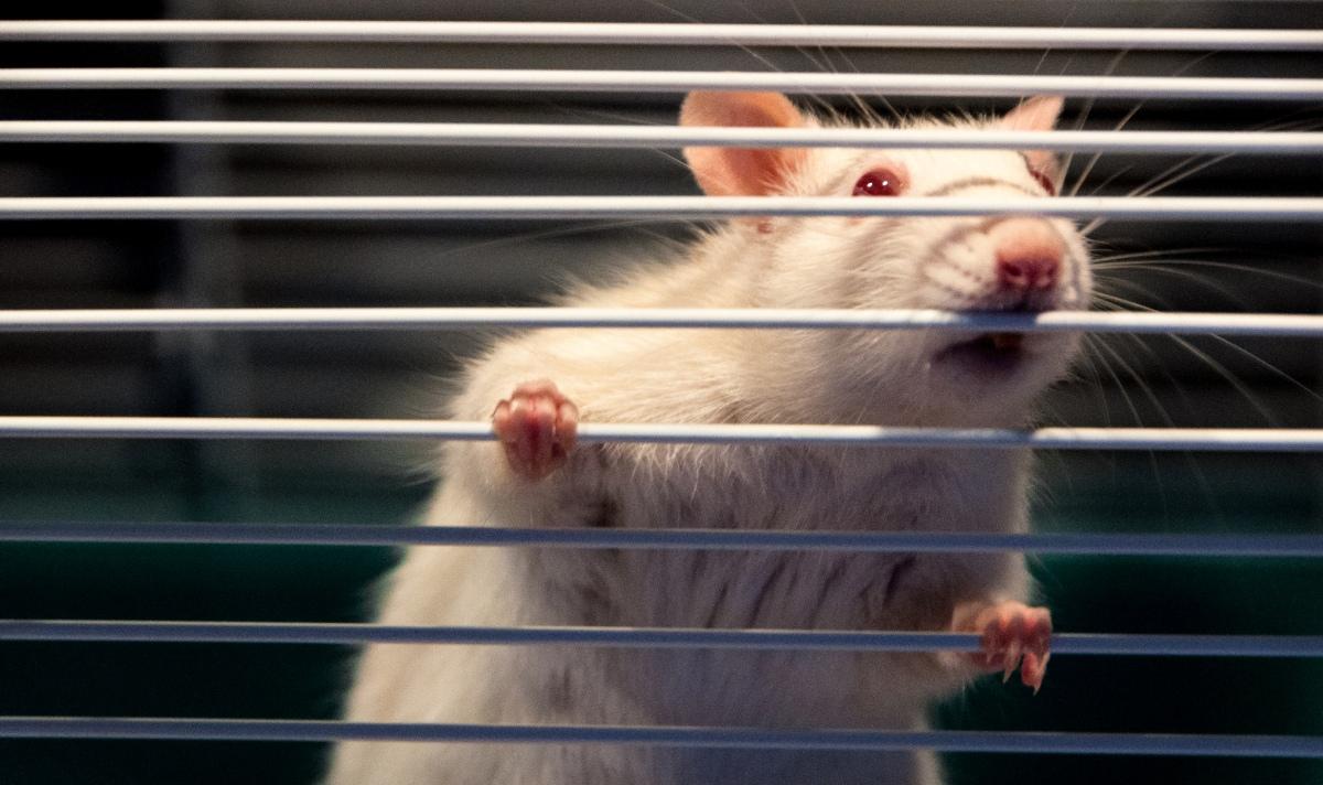 Biggest_mistake_career_change_rat_cage_new