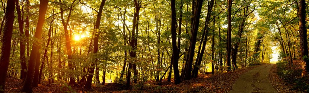 path_woods_sunrise